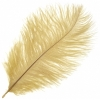 Ostrich Drab Feathers 6-8